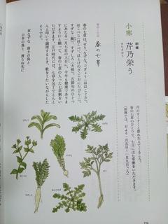 DSC_0698.JPG